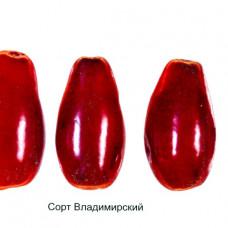 Кизил Владимирский (Однолетний, ОКС)